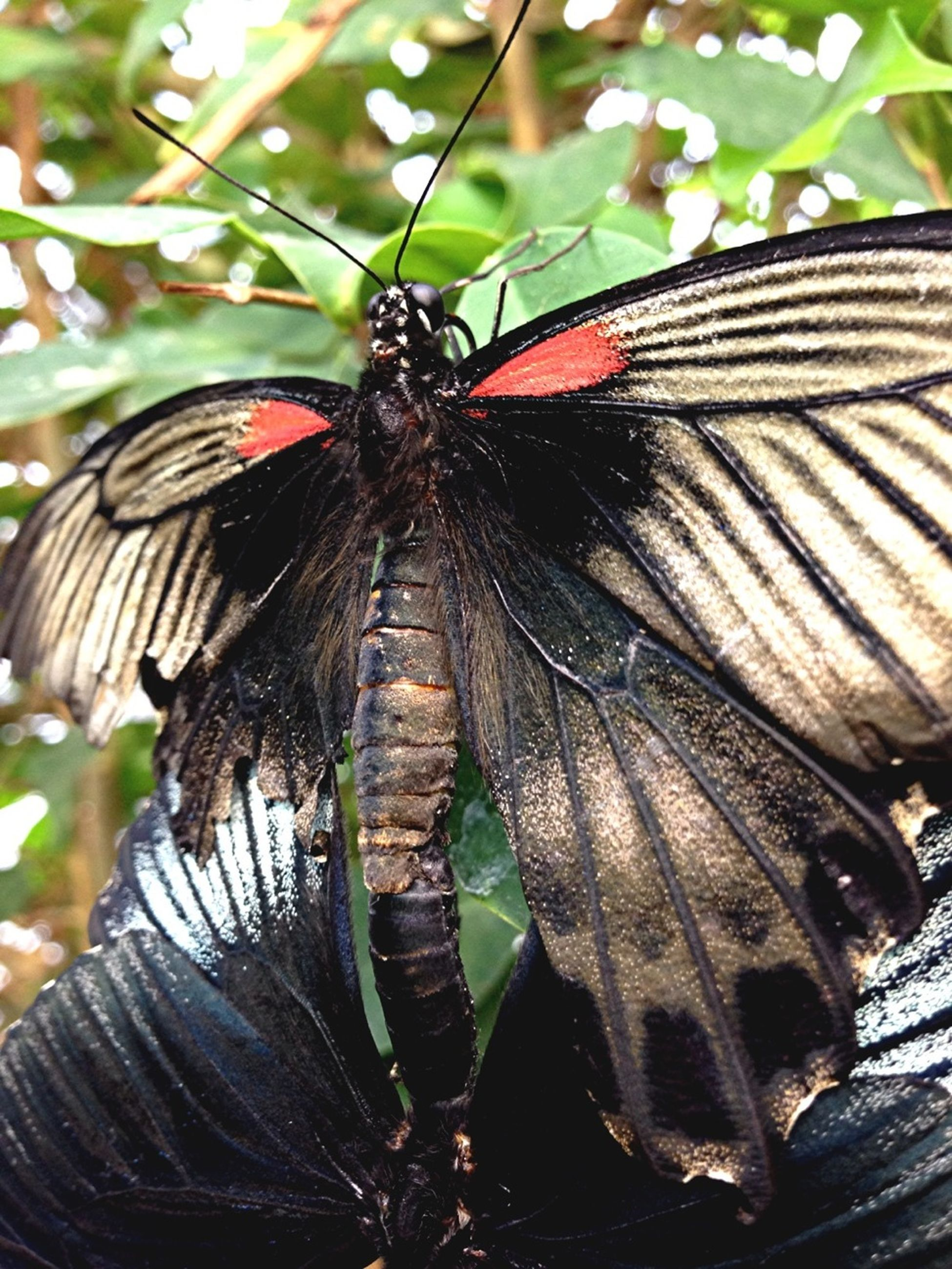 one animal, animal themes, animals in the wild, insect, wildlife, butterfly - insect, animal wing, butterfly, close-up, focus on foreground, animal markings, natural pattern, nature, beauty in nature, flower, perching, leaf, growth, outdoors, day