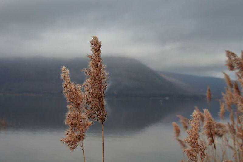 la tranquillità del lago Italy Lago Di Vico Lazio Tranquility Tranquil Scene Montains    Lago Water Acqua Reflex Art Sky Landscape Nature Bellezza Beauty In Nature Mountain Lake Sky Close-up Plant Landscape Cloud - Sky Calm Lakeside