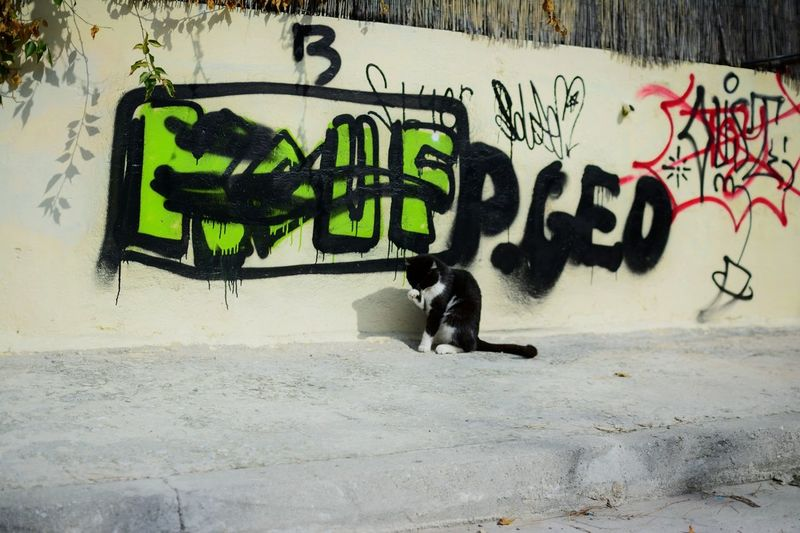 Greece Athens Athens, Greece Graffiti Wall - Building Feature Art And Craft Cat Animal No People Creativity Text Outdoors Drawing - Art Product EyeEm Best Shots Streetphotography Beauty In Nature Still Life EyeEmBestPics Cityscape Cute Cats Beautiful Nature Nature EyeEmNewHere Welcome To Black Place Of Heart Your Ticket To Europe Been There.