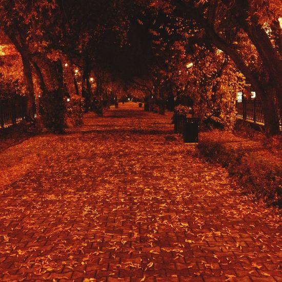 Самое лучшее, что может случиться - это осень First Eyeem Photo