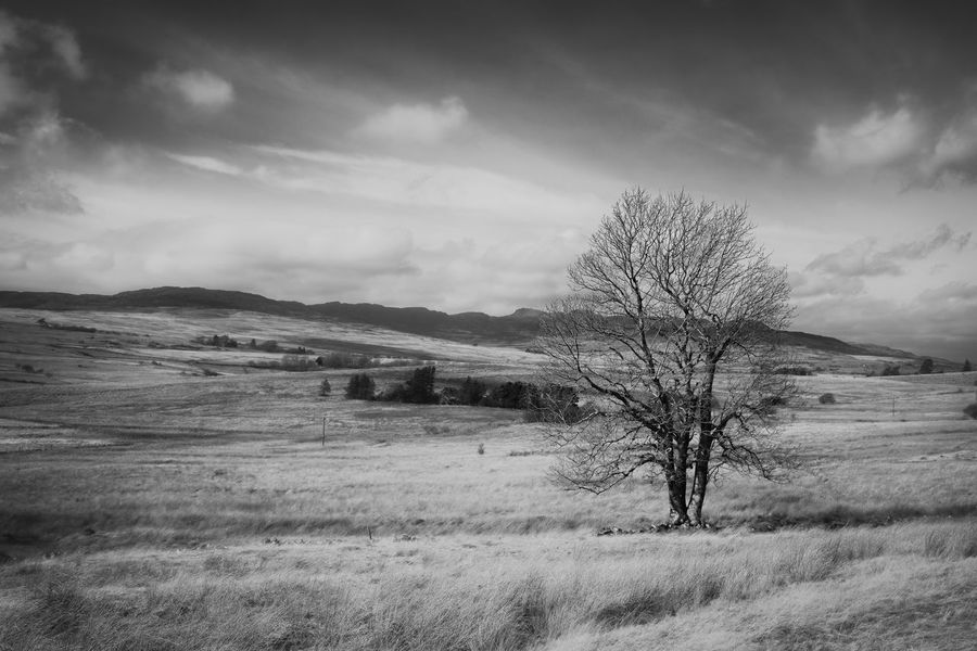 Bare Tree Beauty In Nature Black & White Cloud - Sky Cloudy Countryside Day Field Grass Hill Horizon Over Land Landscape Mountain Nature No People Non-urban Scene Outdoors Remote Rural Scene Scenics Sky Solitude Tranquil Scene Tranquility Tree