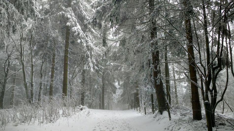 Schnee Wald