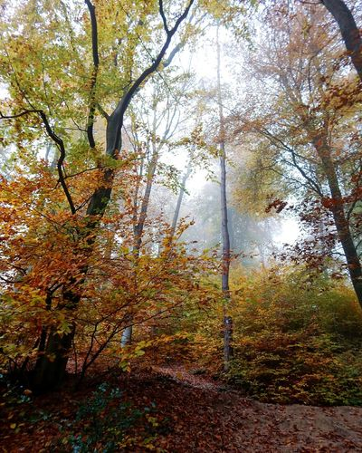 Mysterious Forest Autmn Magic Atmospheric Foggy Beautiful Nature Eyem Nature Lovers  Non-urban Scene Geisenheim