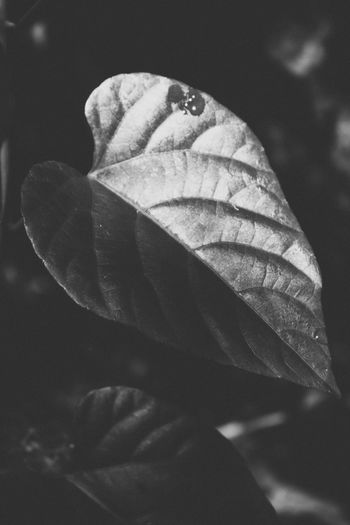 Bnw Dark Life Light Nature Plant Shadows & Lights Tree Beauty In Nature Blackandwhite Close-up Day Forest Growth Leaf Light And Shadow Monochrome Nature No People Outdoors Plant Shadow