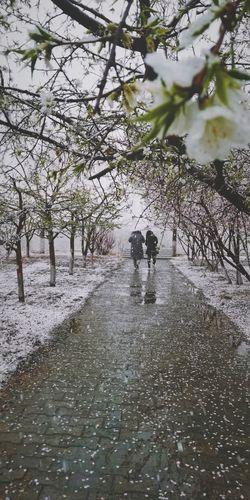 在四月的雨雪中漫步 Cold Snow Beauty In Nature Life Tree Water Puddle Full Length Men Wet Silhouette Reflection