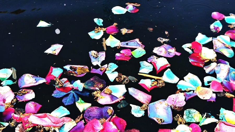 💙🌼💙 Multi Colored Water No People Outdoors Close-up Day Beauty Nature Petal_perfection Petals Of Roses Petals In Pink Flower Collection Water_collection Fountain Water Freshness Flower Head High Angle View Flowers_collection