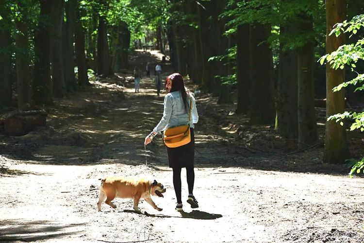 Walking The Dog Dog EnglishBulldog Forrest Nature Relaxing Quality Time