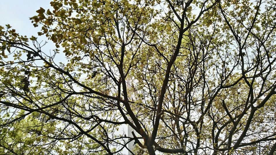 || Nature Theories || Delhi, India. TheFoneFanatic Nature PhonePhotography Mobilephotography Nokia808 Colorful Multi Colored Streetphotography Tree Flower Branch Backgrounds Full Frame Clear Sky Sky Close-up Autumn Mood