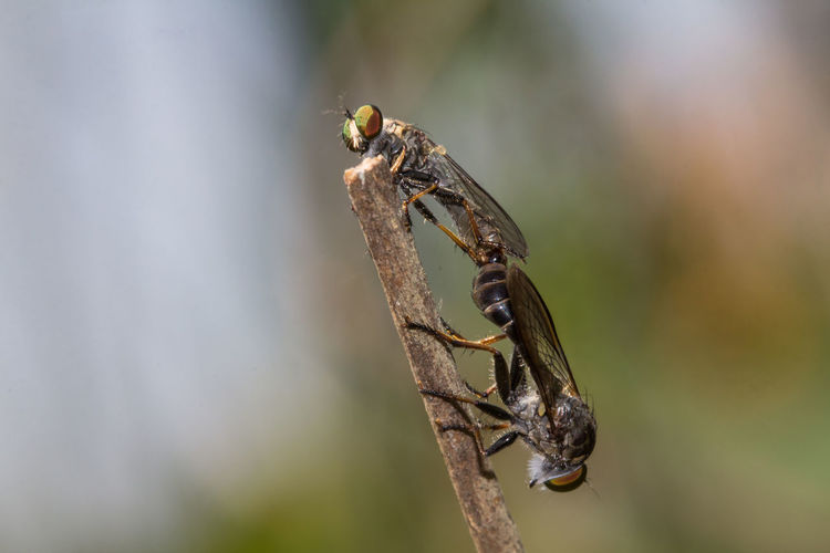Close-up of insect on twig