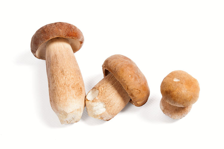 Brown Close-up Cut Out Edible Mushroom Food Food And Drink Freshness Fungus Group Of Objects Healthy Eating Indoors  Mushroom No People Snack Still Life Studio Shot Three Objects Vegetable Wellbeing White Background