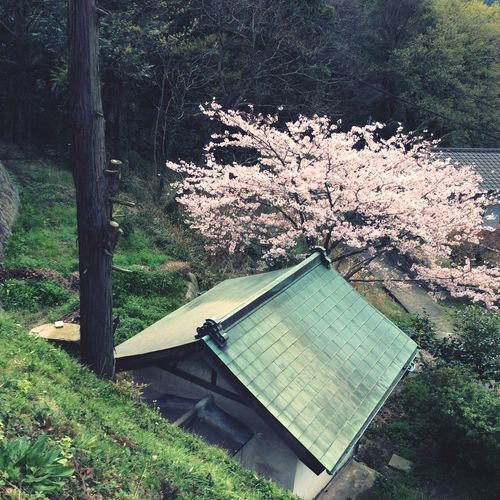 High Angle View Of Cherry Tree By House