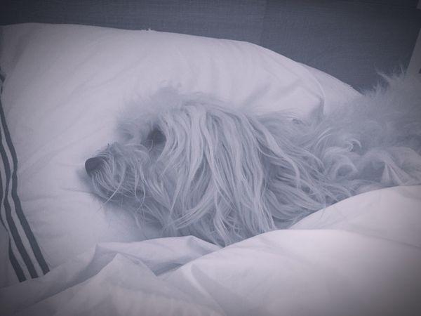 Goodnight Bedtime♡ Isis😍 Ilovemydog Mybaby❤ Ready For Bed Sleepy Dog 🐶❤️😍😍