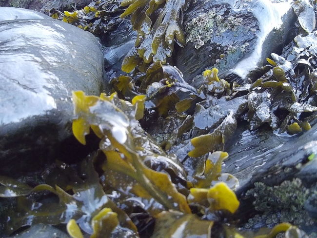 Beauty In Nature Day No People Outdoors Rock - Object Seaweed Water Wet Rocks The KIOMI Collection