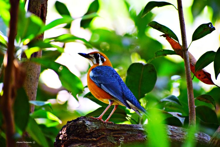 Bird On A Branch Orange Color Beauty In Nature Bird Photography Blue Color Clicked On Nikon D3300
