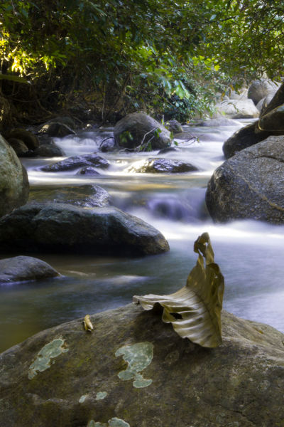 silky water Scenic Tranquility Vertical Composition Beauty In Nature Day Leaf Leaves Long Exposure Motion Nature No People Outdoors Rock - Object Rock Formation Scenics Slow Shutter Statue Tranquil Scene Tree Water Waterfall