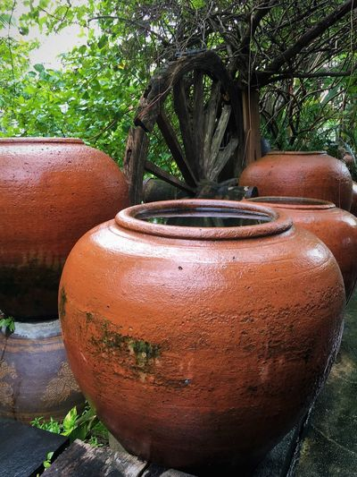 Cold water in the jar at backyard garden Cold Water Clay Clay Jar Close-up Day Earthenware Garden Growth Jar Nature No People Outdoors Plant Potted Plant Terracotta Tree Vase Water โอ่ง โอ่งดิน