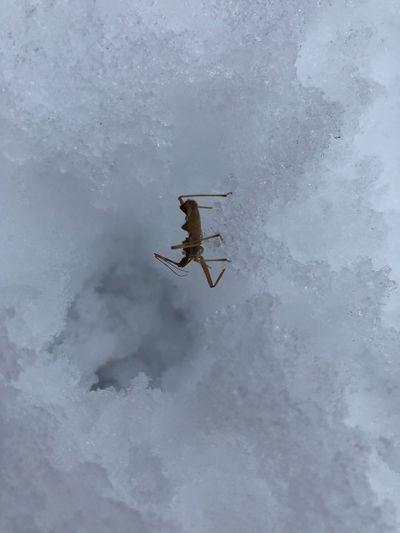 Bug into ice