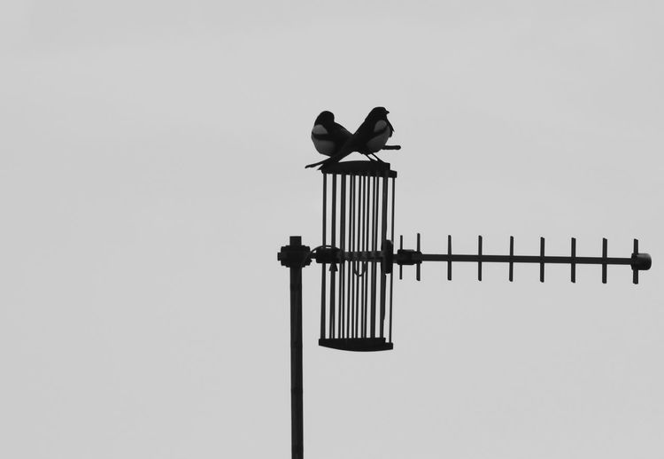 Adapted To The City Bird Bird Photography Birds Blackandwhite Day EyeEm Nature Lover Monochrome Monocrome Photography Nature Nature_collection No Edit/no Filter Sky
