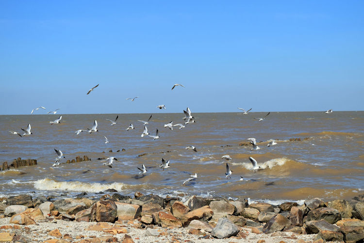 Animal Themes Animal Wildlife Animals In The Wild Beach Beauty In Nature Bird Blue Day Flock Of Birds Flying Horizon Over Water Large Group Of Animals Nature No People Outdoors Scenics Sea Sea And Sky Seagulls Seascape Sky Water Azovsea