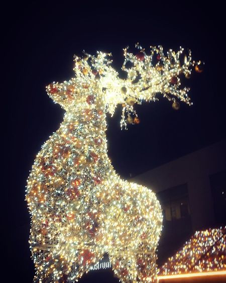 Christmas christmas tree Celebration Christmas Decoration Illuminated Night Christmas Lights