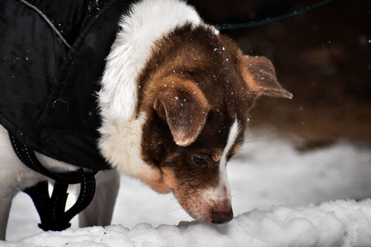 Close-up of dog on snow covered field