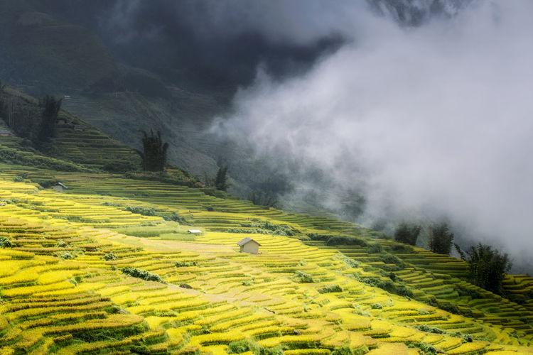 cánh đồng mùa lúa chín Clouds And Sky Landscape Mountain Mountains Rice Paddy Fields Sunlight Travel Photography Vietnam