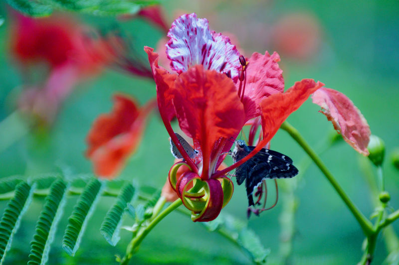 Animal Themes Animals In The Wild Beauty In Nature Buzzing Close-up Day Flower Flower Head Focus On Foreground Fragility Freshness Growth Insect Nature No People One Animal Outdoors Plant