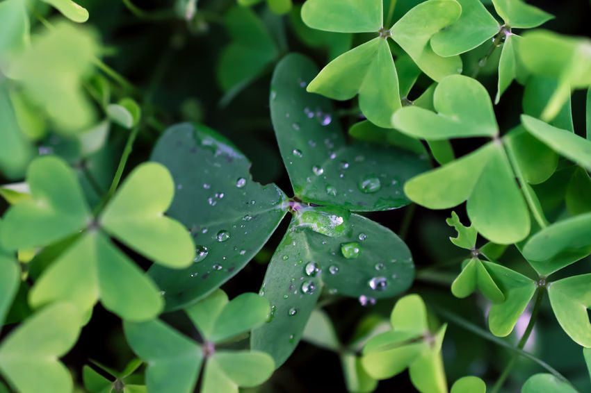 Beauty In Nature Close-up Drop Fragility Freshness Green Color Growth Leaf Nature Outdoors Plant RainDrop Water Wet