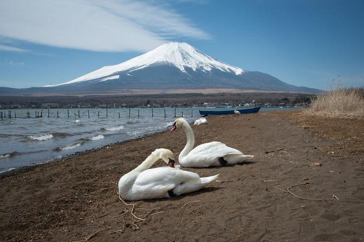 White ducks on snow covered land against sky