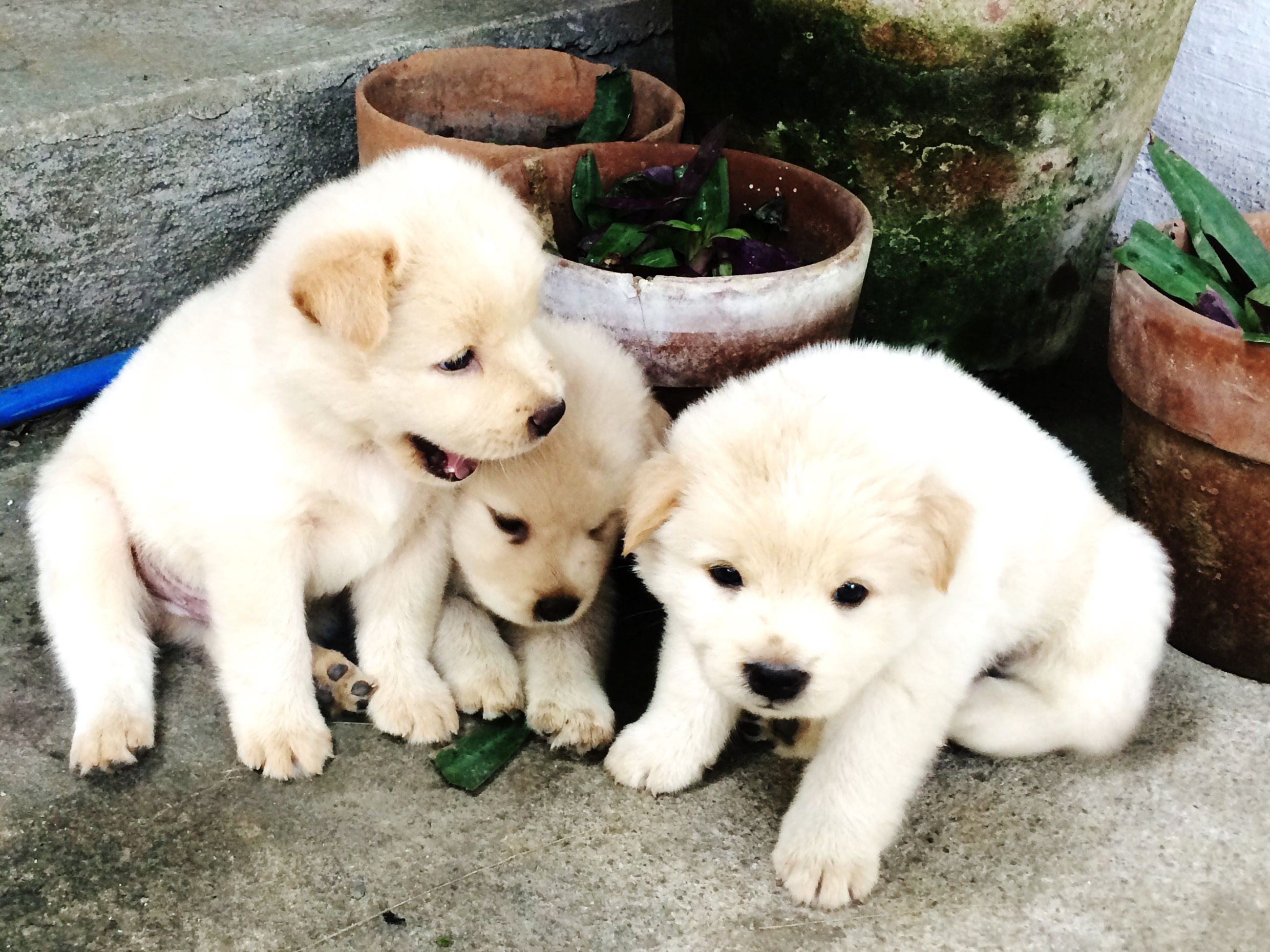 domestic animals, pets, animal themes, mammal, relaxation, high angle view, one animal, dog, two animals, cute, lying down, young animal, looking at camera, resting, togetherness, white color, portrait, puppy, cat, domestic cat