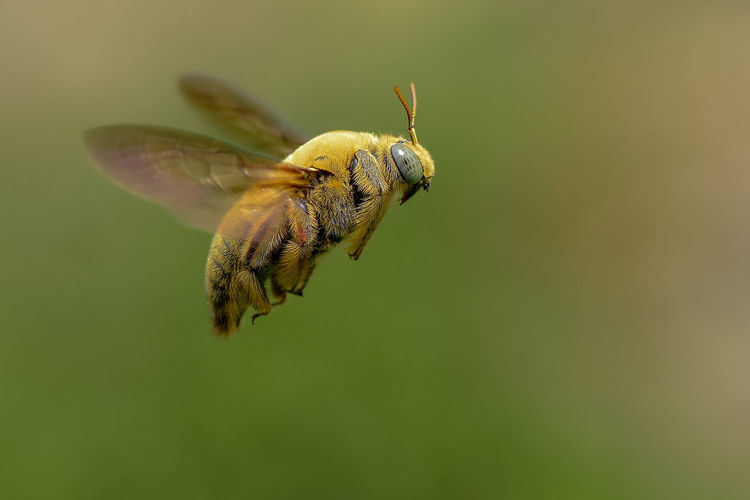Close-up of insect flying over field