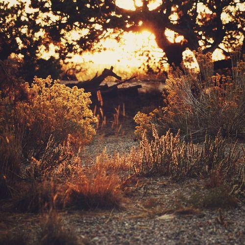 Utah Sunrise EyeEm Nature Lover