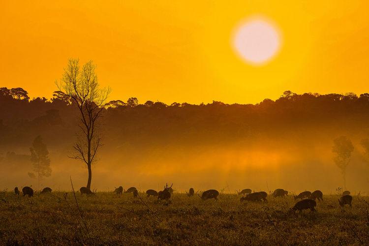 Deer grazing plants against orange sky