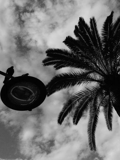 Ceci N'est Pas Un Palmier