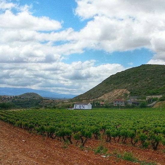 ViñaLanciano de @BodegasLan. Uno de los viñedos más privilegiados de Larioja . Interesante visita. No es lo mismo vivirlo que contarlo.