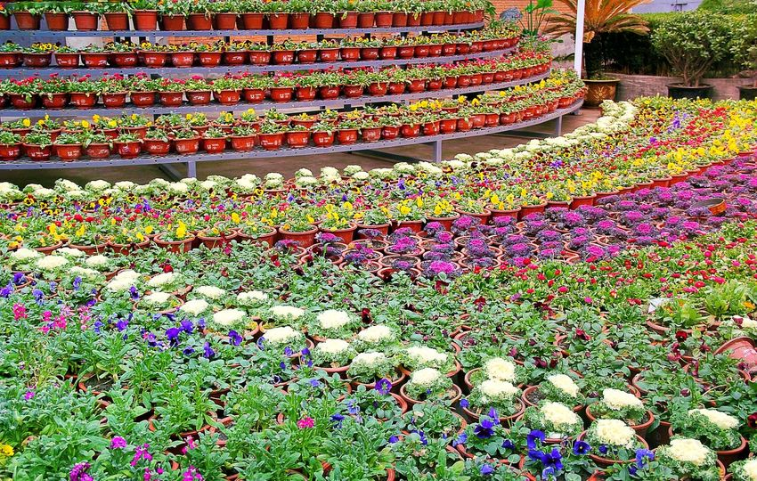 Colorful Streetphotography Street Photography Colors Beautiful Full Of Flowers Flowers Potting Decoration