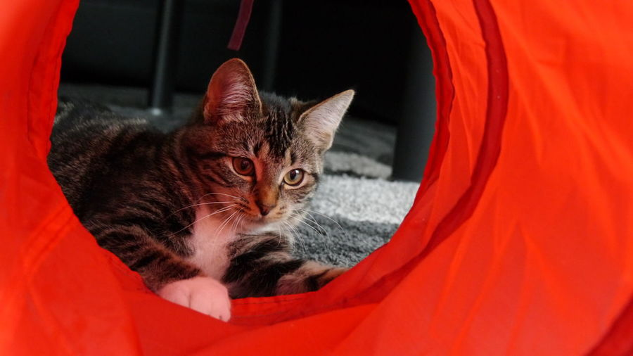 playing with the tube Animal Themes Domestic Animals Domestic Cat EyeEm Gallery Eyem Gallery From My Point Of View Mammal No People Pets Playing Cat Playing With Tube Selective Focus Tube Pet Portraits
