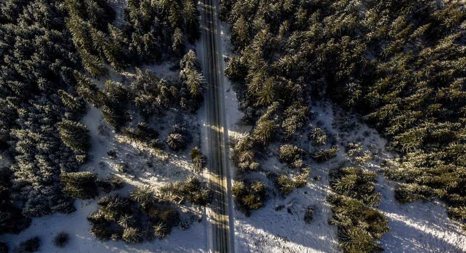 Aerial view of road passing through snow-covered forest