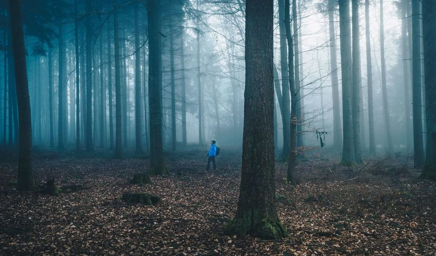Hiker on the forest Men Forest One Person Hiker Hikerslife Naturelovers Forest Photography Fog Nebel Foggy Mist Germany Travel Backgrounds Scenics Nature Misty Person Wald Wood