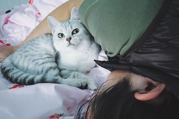 Fox Sleeping Cat Animal Pets Cat Lovers Bedroom Lying Down Relaxation Animal Themes British Shorthair On The Bed Visual Creativity