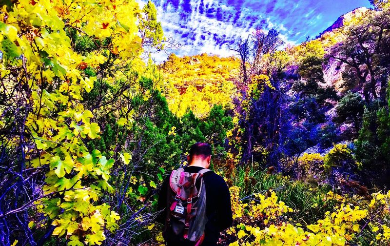 This is the desert!? Of course it is. Yellow World Backyard Vegas Adventure Hiking Digging For Depth In Living Colour Lighting Life