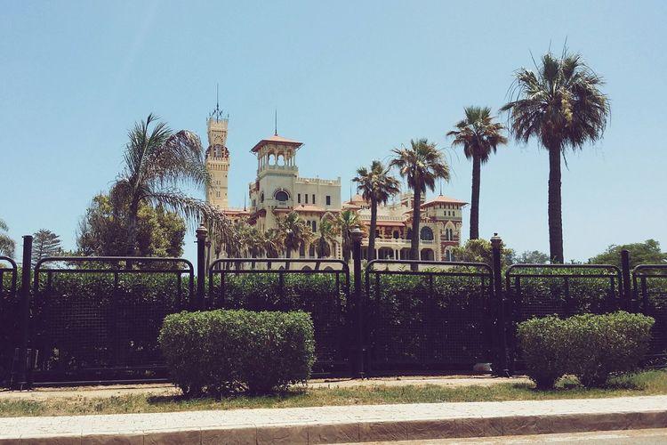 Alexandria Luxury Traveling Elmontazah Palace Eyeem Egypt Egypt Trees Palm Trees Vscocam
