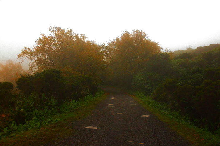 Autumn Colors Autumn🍁🍁🍁 Beauty In Nature Day Empty Road Foggy Weather Heathland  Landscape Misty Mountains  Nature No People Outdoors Plane Trees Scenics The Way Forward Tree Yellow Leaves