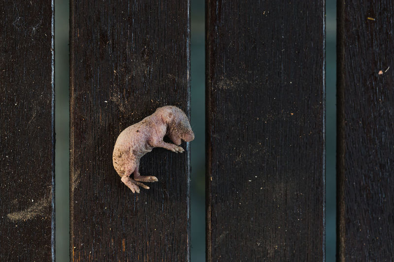 High angle view of a cat on wooden wall