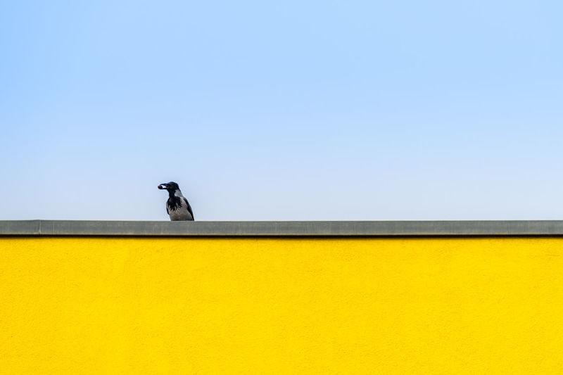 Low angle view of bird perching on yellow wall