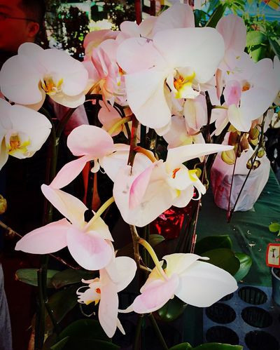 May a thousand orchids bloom Chinatown Chinese New Year Cny2015 Flowers Orchids