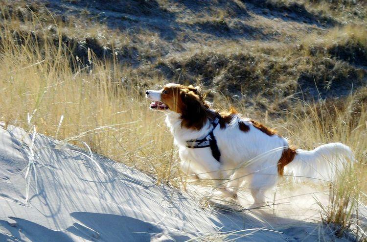 Kiwi My Dog The Action Photographer - 2015 EyeEm Awards Capturing Movement Capturing Freedom Freedom Capture Freedom Capturing Freedom Summer Dogs Denmark Nature Photography Beach Nature