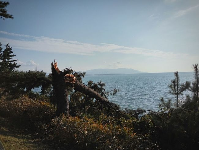 Clear Sky Blue Sky Sky And Sea Brocken Tree After Hurricane Tree On Rock Fukui Prefecture Sakai Tojinbo 東尋坊 Sea Water Tree Sky Nature Horizon Over Water Beauty In Nature Outdoors Vacations Beach Scenics Day