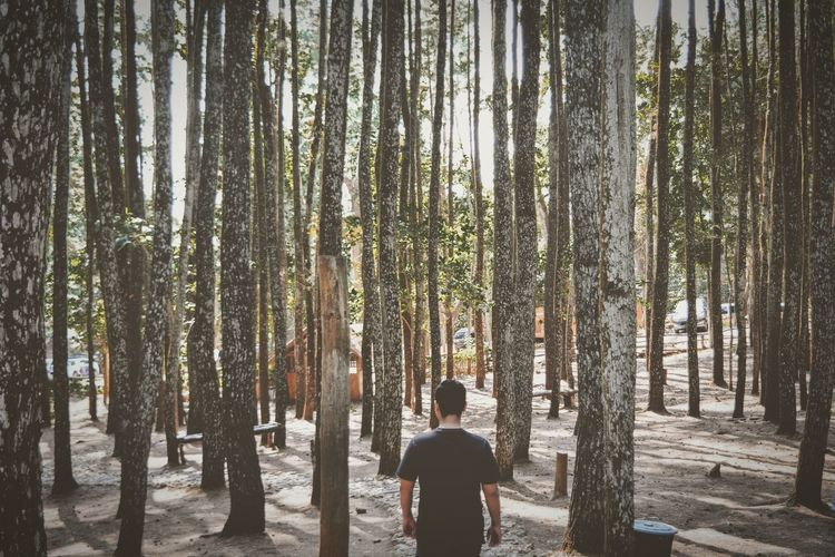 Rear view of man standing by trees in forest