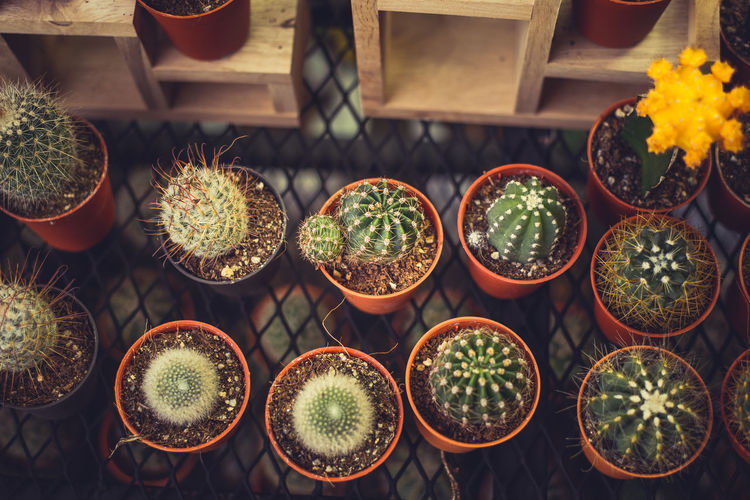 Arrangement Barrel Cactus Beauty In Nature Botany Cactus Choice Flower Pot Green Color Growth High Angle View Indoors  Large Group Of Objects Nature No People Plant Plant Nursery Potted Plant Side By Side Spiked Succulent Plant Thorn Variation